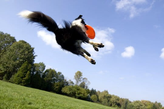 Un sport pour tous les chiens