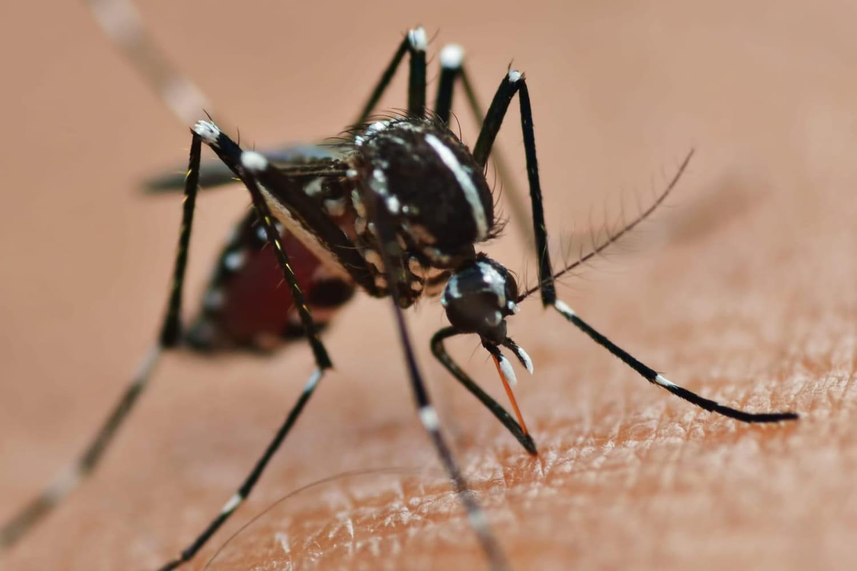 Zika et grossesse: des retards moteurs et cognitifs chez les bébés