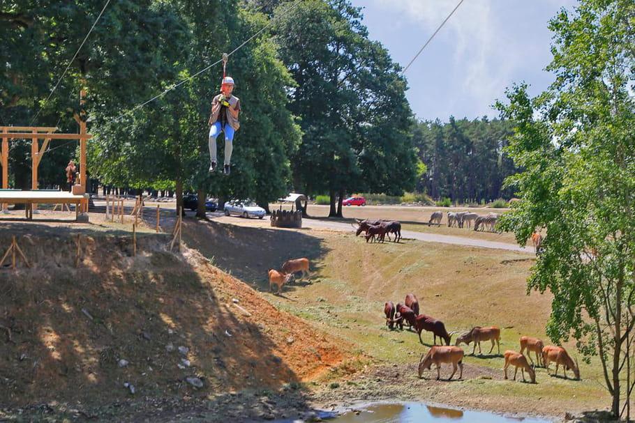 Volez au dessus des lions au parc zoologique de thoiry for Parc animaux yvelines