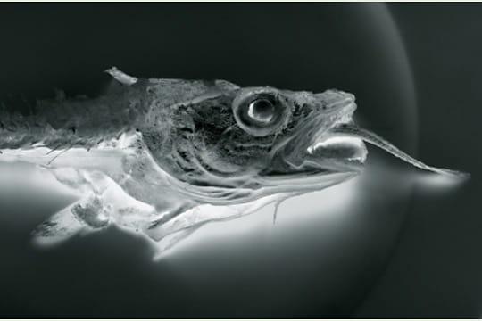 Le dernier repas d'un merlan par Eric Morin