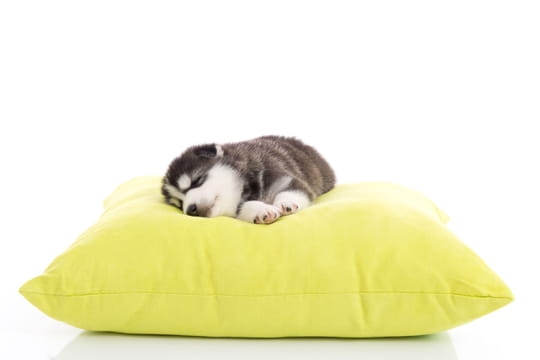 Meilleurs coussins pour chiens pour leur bien-être