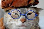 picto chat herri le phuez