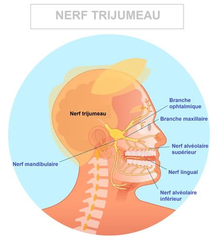 Schéma du nerf trijumeau