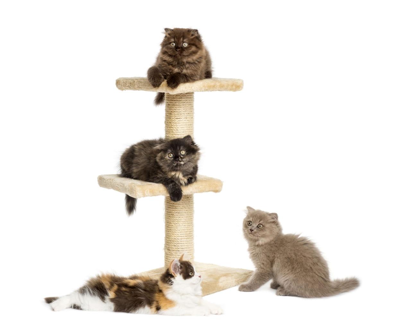 Comment Construire Un Arbre À Chat meilleur arbre à chat : notre sélection des structures à