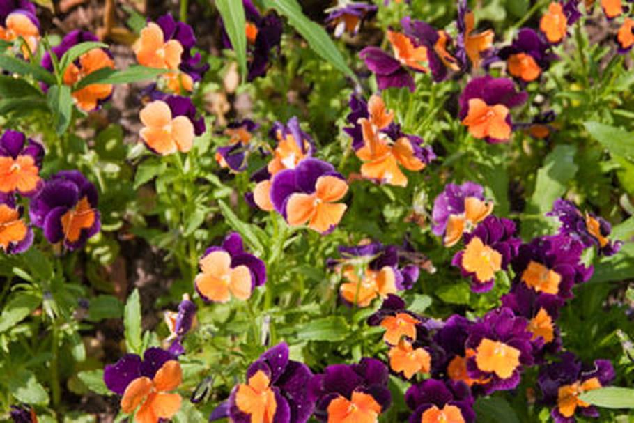 Quelle fleur planter selon les saisons ?