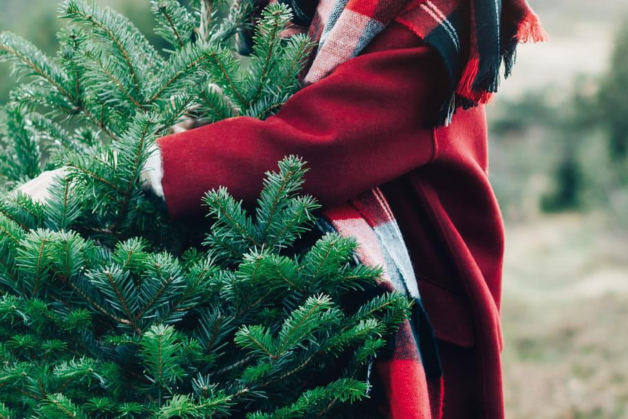 Recycler son sapin de Noël avec Botanic