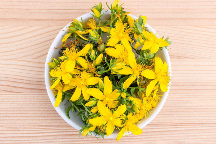 St. John's Wort: dosage, side effects of a natural antidepressant