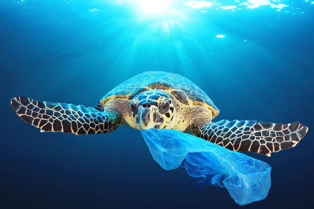 tortue-plastique-à-usage-unique-ocean