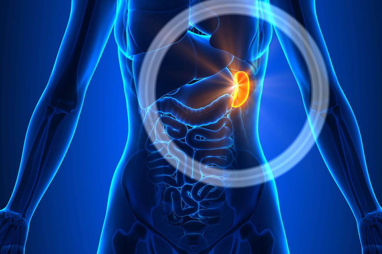 Splénomégalie: cause, taille de la rate, symptômes, traitement