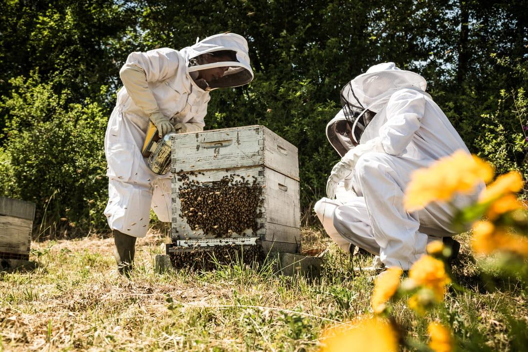 apiculteur-melvita