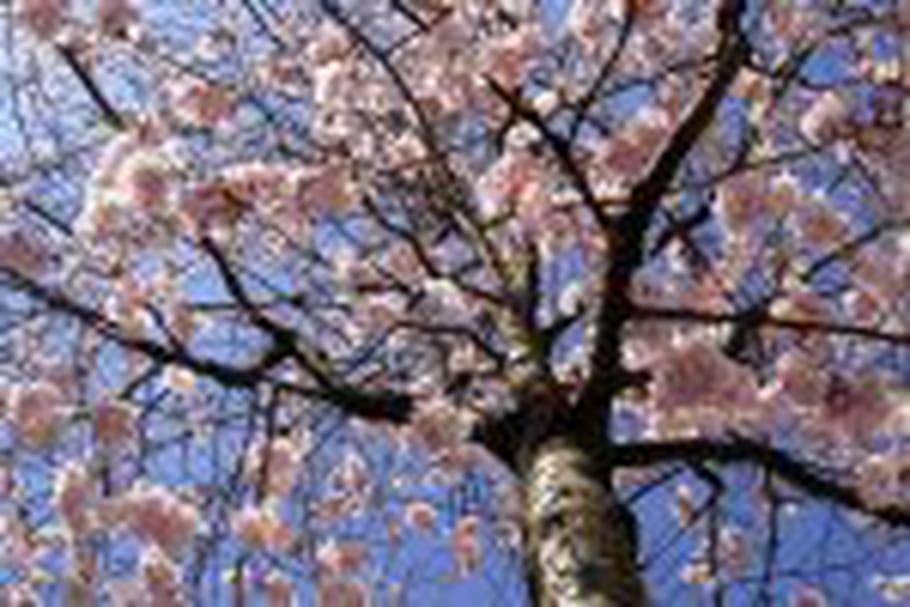 L'Elysée accueillera l'arbre de l'année 2011