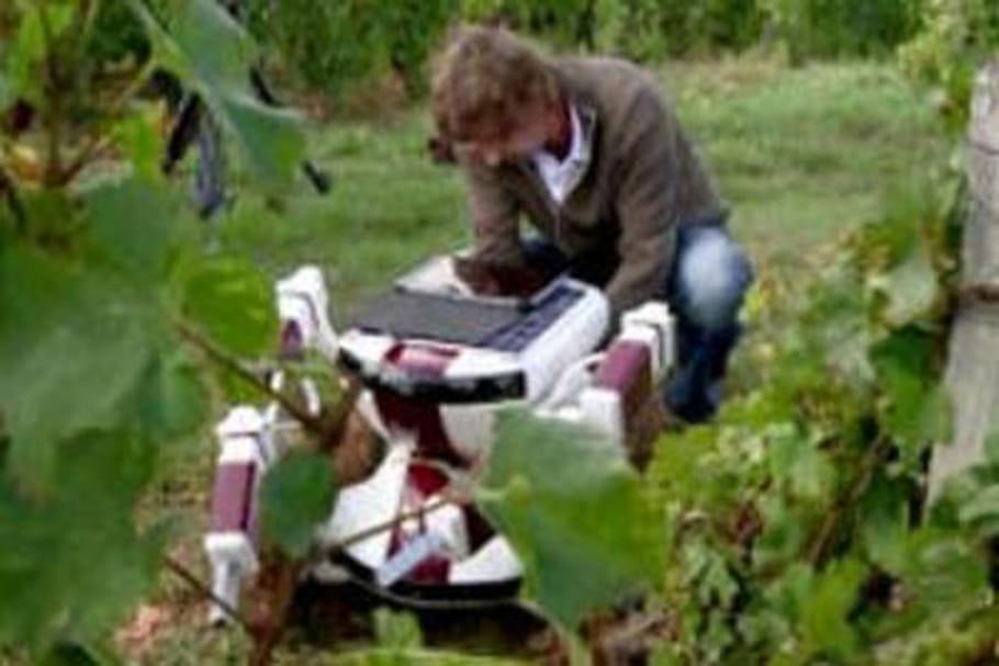 Vendanges : vers une main d'œuvre robotisée ?