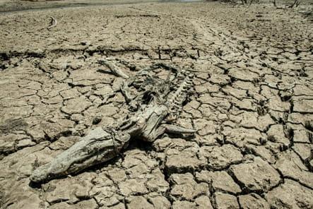 Squelette de crocodile