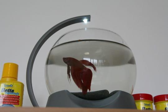 Avoir Un Aquarium avoir un aquarium au bureau : le test