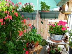 bien surveiller les fleurs du balcon