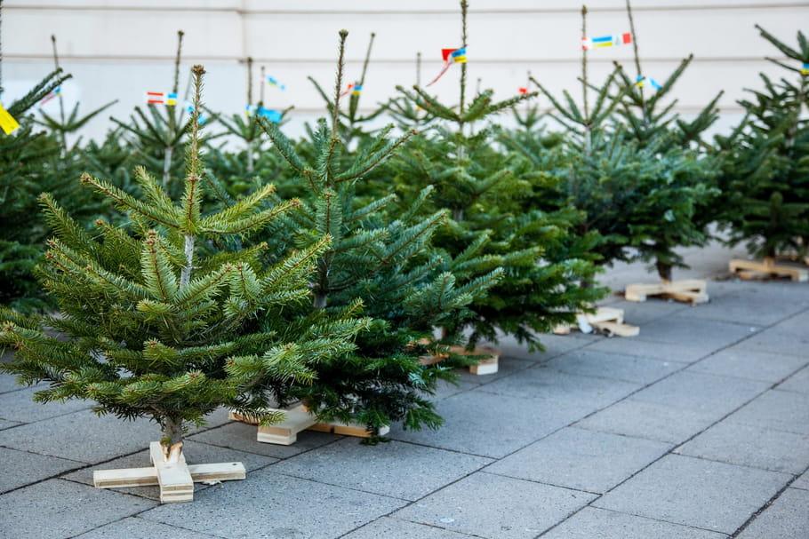 Sapin de Noël: où l'acheter, comment le choisir?