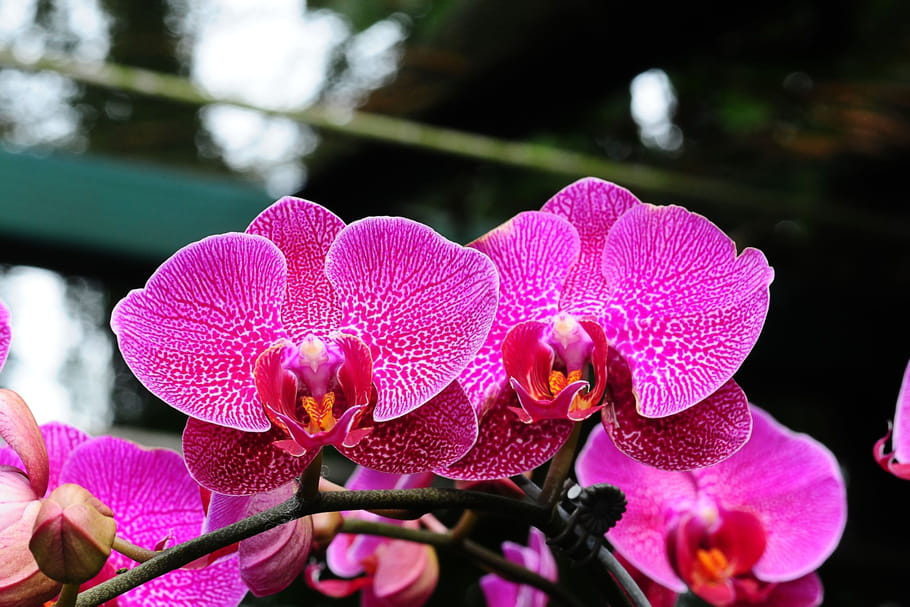 orchidee entretien hiver