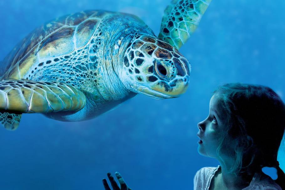 L'île des manchots, nouveauté de l'aquarium Sea Life Paris Val d'Europe