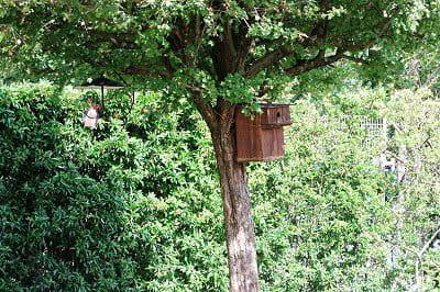 le jardin de rené guiraud