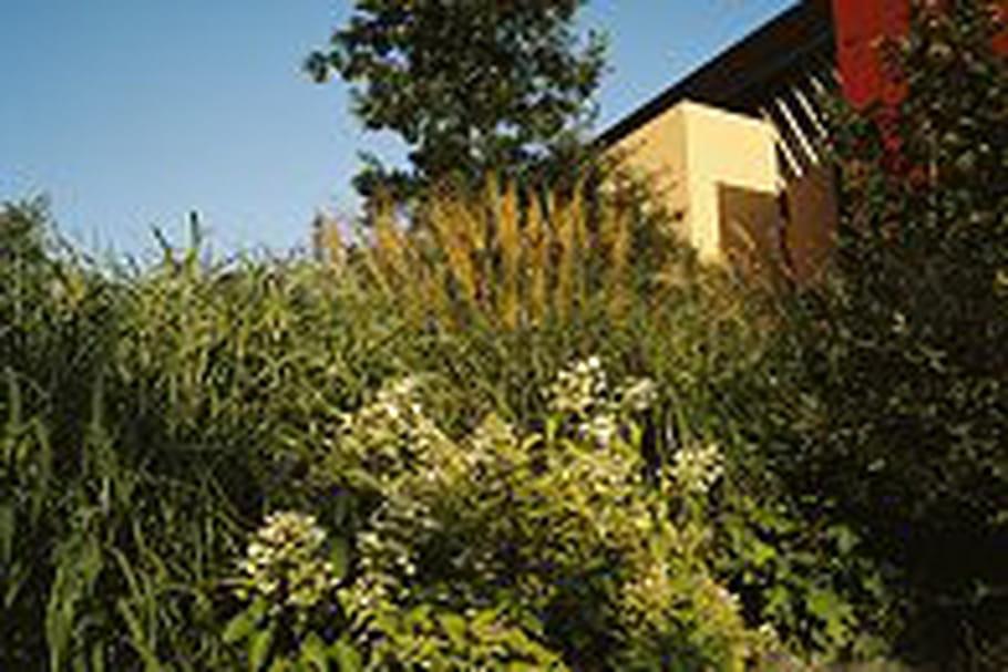 Rencontre avec Gilles Clément, le concepteur du jardin-savane du musée du quai Branly