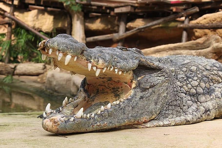 Ferme aux crocodiles de Pierrelatte: découvrez le nouveau terrarium!