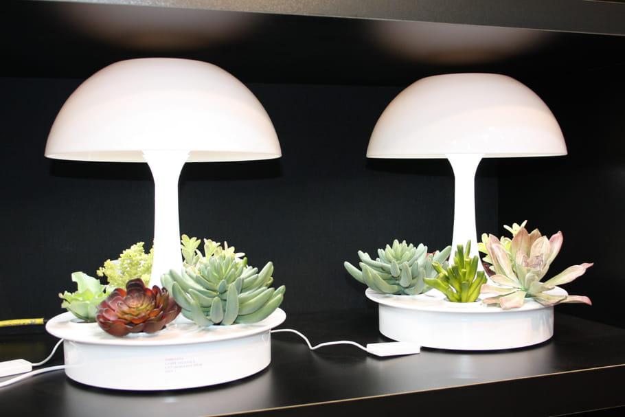 La lampe/pot à fleurs Ambianta chez Glop Studio