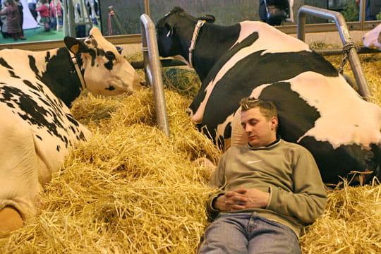 Vache Prim'Holstein