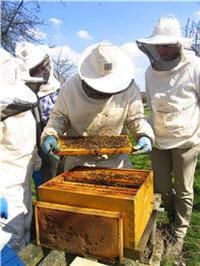 la propolis sert de vernis protecteur à la ruche.