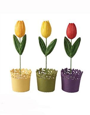 tulipe de casa