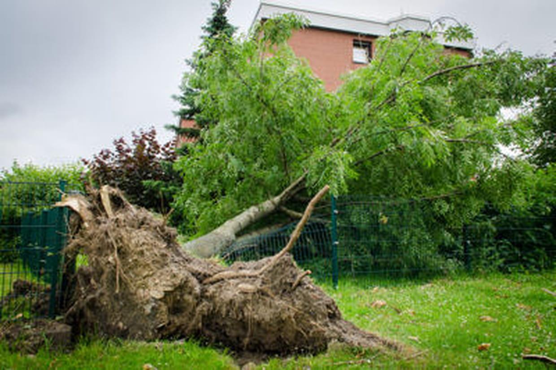 Comment Se Débarrasser Des Bambous Dans Le Jardin comment faire mourir un arbre ?