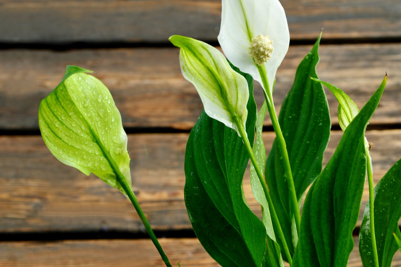 Plante Exterieur Qui Aime L Eau ces plantes qui absorbent l'humidité