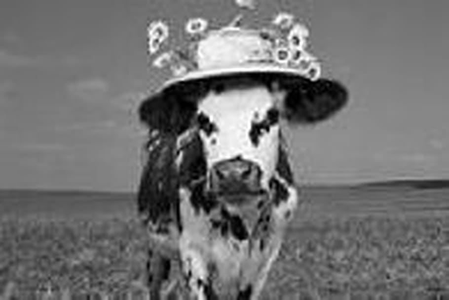 """Oh, la vache ! Une exposition """"vachement"""" chapeautée"""
