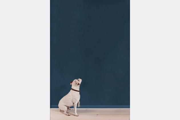Peinture bleue Annie Sloan