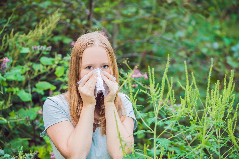 Allergie à l'ambroisie: pic, jusqu'à quand, que faire?