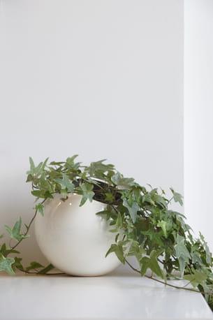 le lierre. Black Bedroom Furniture Sets. Home Design Ideas