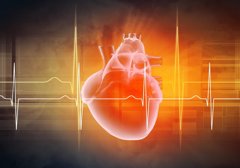 Rythme cardiaque: normal, au repos, lent, élevé, troubles