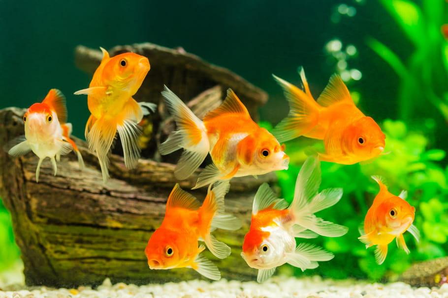 Animaux domestiques: des poissons aux gerbilles, le guide