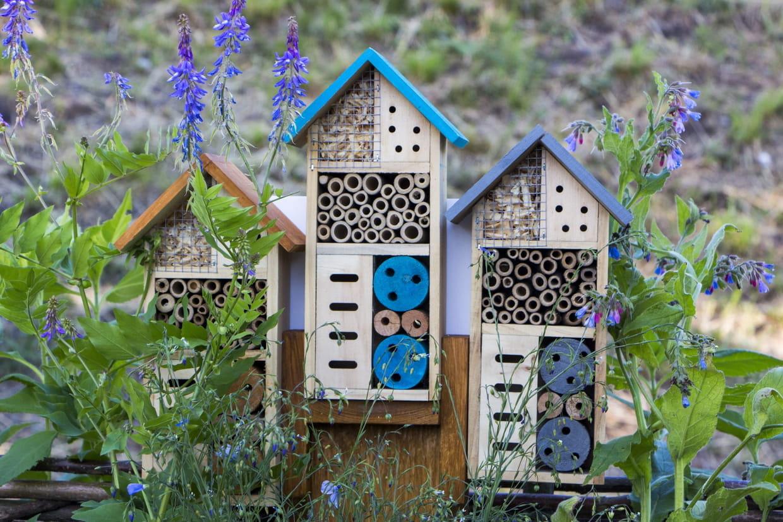 Hotel A Insecte Fabrication hôtel à insectes : à quoi ça sert ?