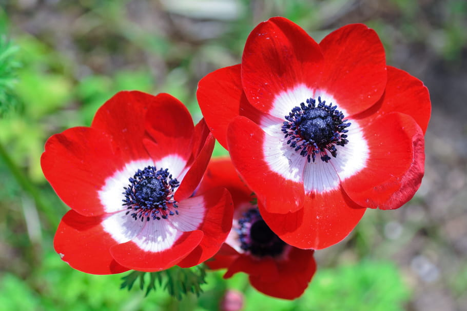 10fleurs pour un jardin rouge