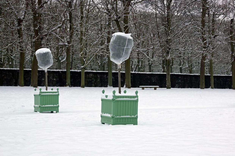 Arbre En Pot Hiver protéger ses plantes du froid en hiver