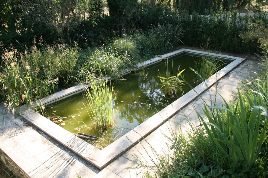 Entretenir un bassin for Piscine jardin rectangle
