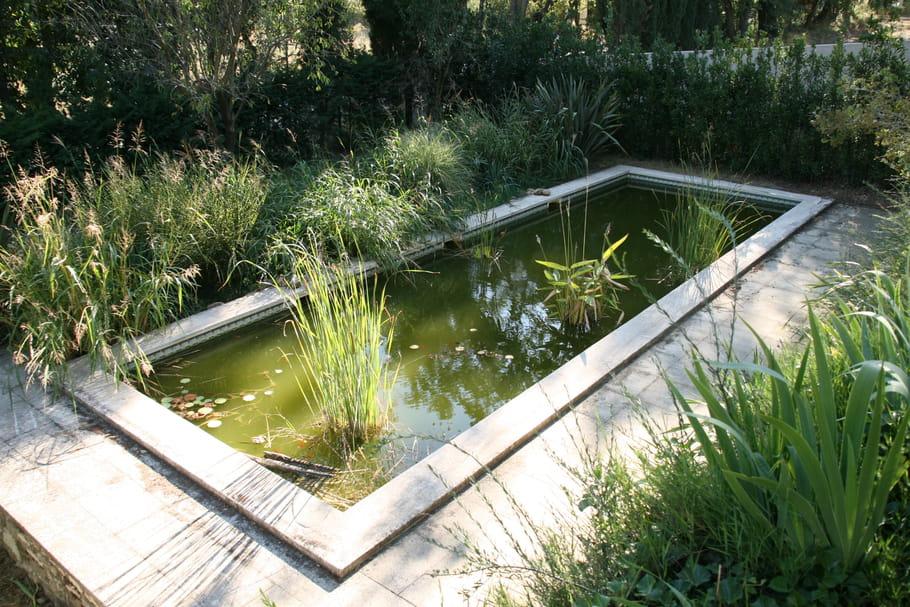 Bassin de jardin: installer, aménager et entretenir un bassin d'extérieur