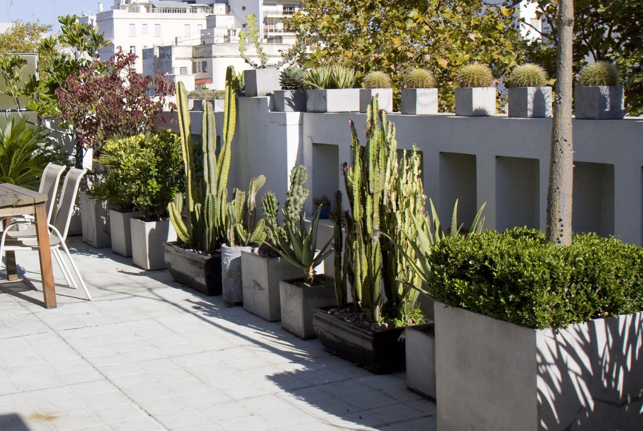 Plante Haute En Pot 8 plantes exotiques pour le balcon