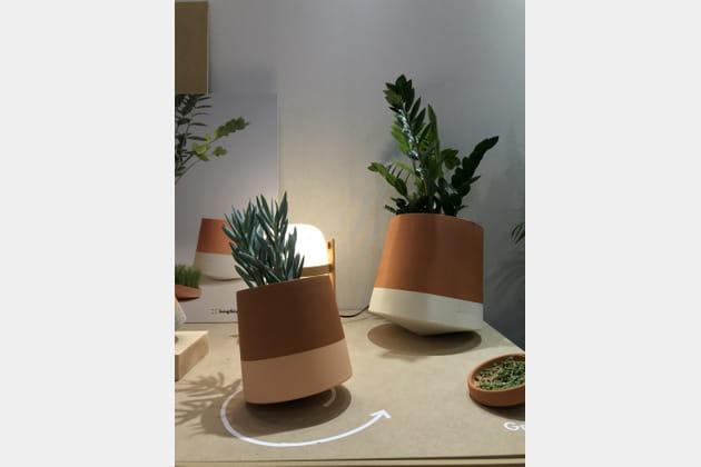 Vase Voltasol de Living Things