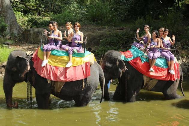 Les miss à dos d'éléphant