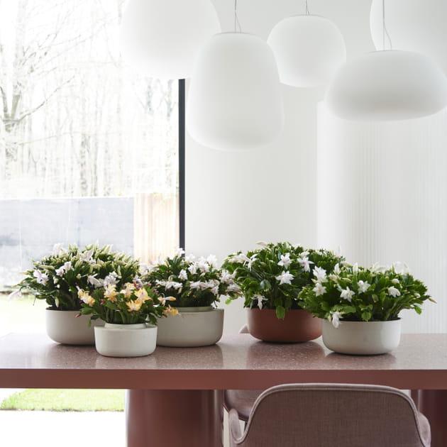 Des plantes multipliées