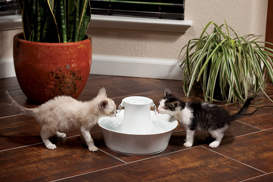 Meilleure fontaine à eau pour chat: guide d'achat