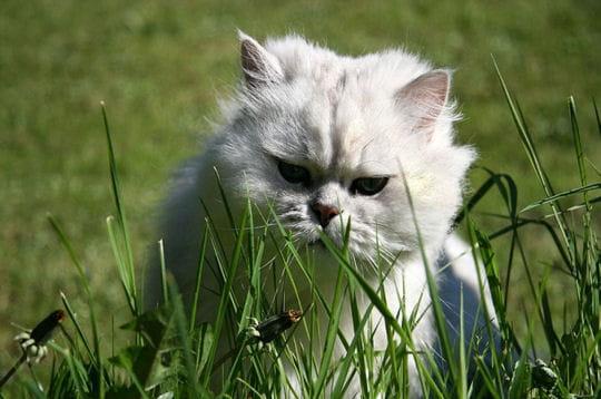 Milord dans les hautes herbes
