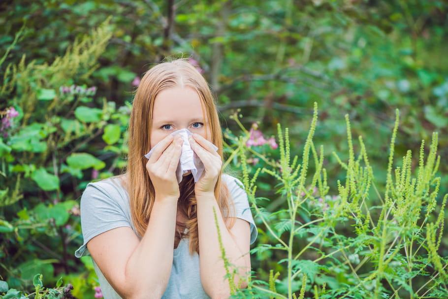 Allergie à l'ambroisie: jusqu'à quand, que faire?