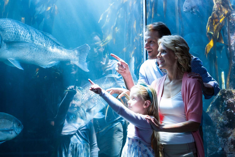 Top des aquariums pour sensibiliser à la protection des océans
